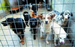 adozioni cani Brindisi: incentivi per le adozioni nei canili